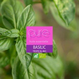 Tropical Basil Organic Essential Oil
