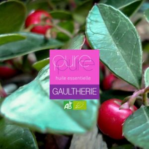 huile essentielle bio gaultherie