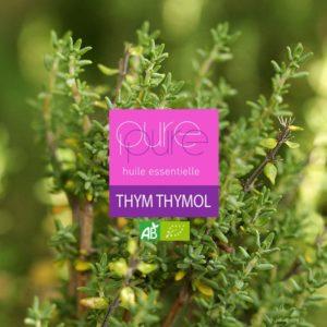 Thymol Thyme Organic Essential Oil
