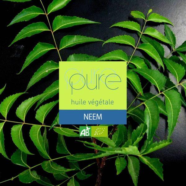 L'huile de Neem : utilisation en répulsif contre les insectes nuisibles