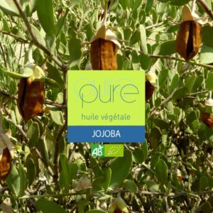 Organic Jojoba plant oil