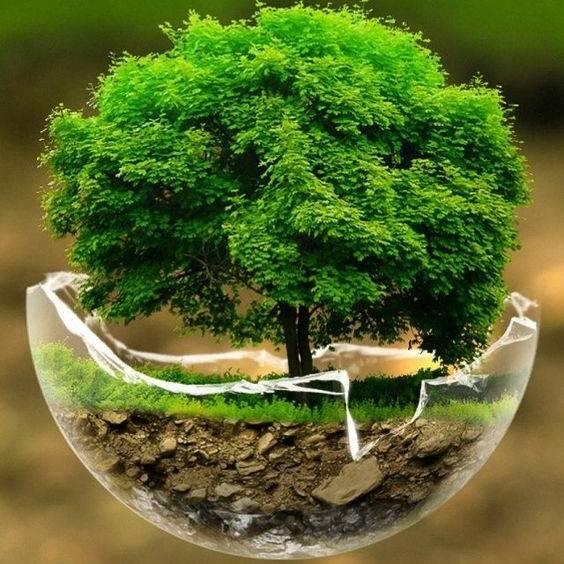 sapin écologique 0 dechet