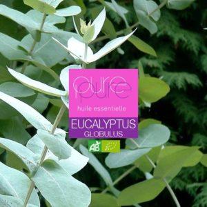 huile essentielle bio eucalyptus globulus