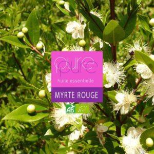 red myrtle organic essential oil