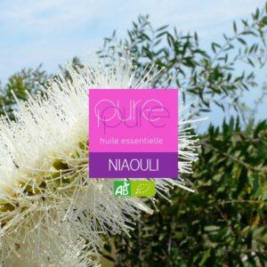L'HE de Niaouli combat toutes les infections