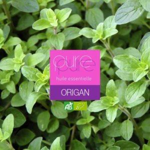Un anti-infectieux naturel efficace : l'huile essentielle d'Origan