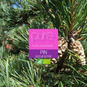 Une huile essentielle contre la toux fournie par le pin sylvestre