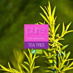 huile essentielle de tea tree : utilisation comme anti-infectieux