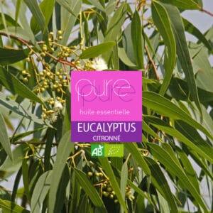 Eucalyptux citronné : une huile essentielle anti inflammatoire
