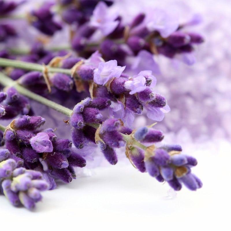 Aspic Lavender
